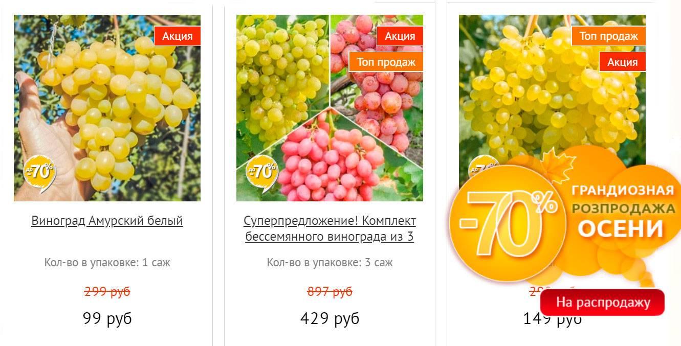 Виноград гала: описание сорта, фото, отзывы — selok.info
