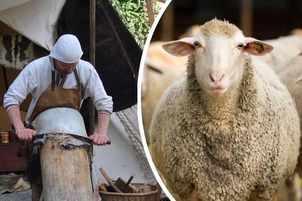 Выделка шкур: как выделать в домашних условиях шкуру овцы, барана и т.д.