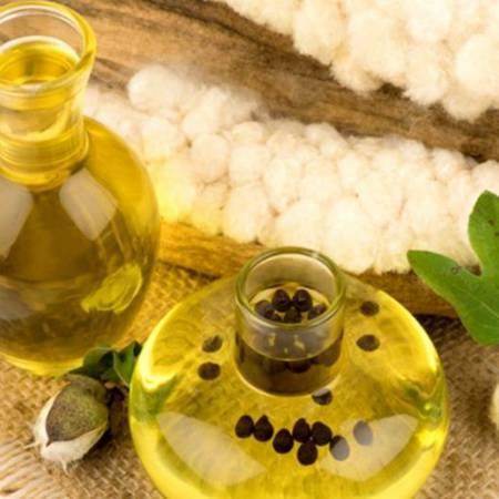 Рыжиковое масло польза и вред для организма женщины, мужчины
