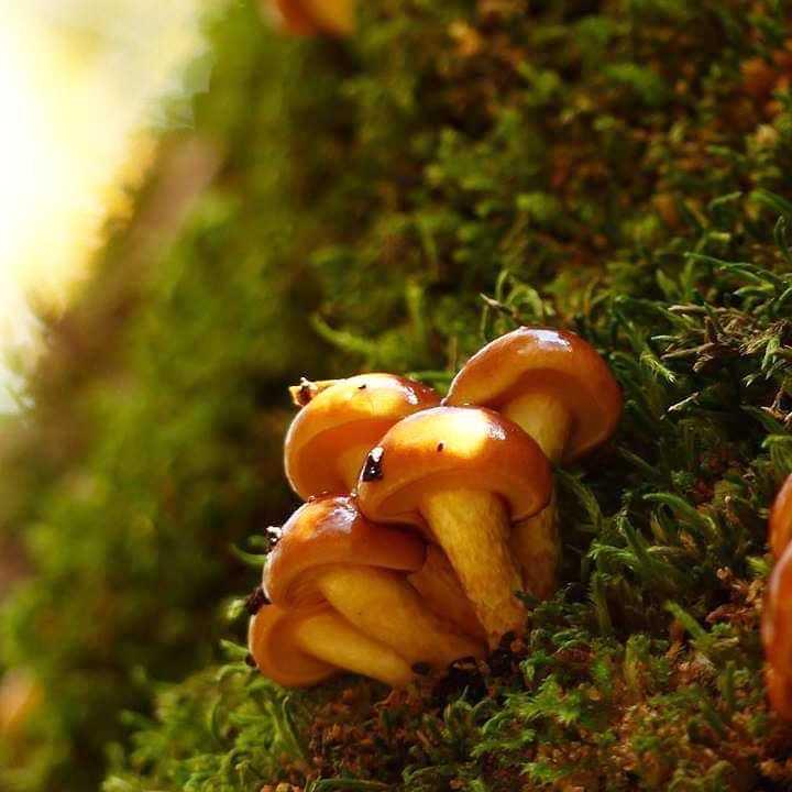 Гриб чешуйчатка клейкая – малоизвестный съедобный поздней осени