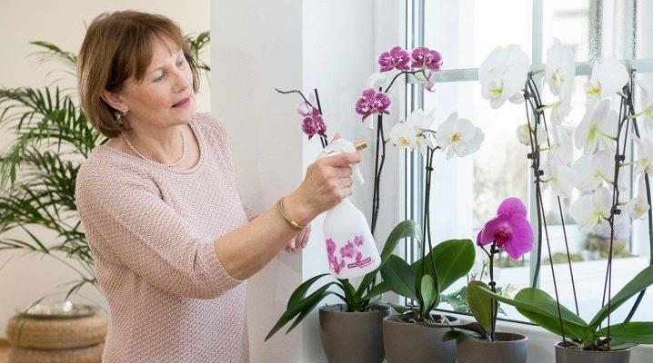 Почему сохнут листья у орхидеи фаленопсис и засыхают стебли: как спасти растение?