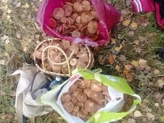 """Лобовская просека, тагайский лес. ульяновцы рассказывают, где собирают грибы, и хвастаются """"добычей"""""""