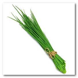 Лук на зелень: как сажать весной в открытый грунт, выращивание из семян, посадка и уход в теплице на перо, полив, многолетние сорта, чем подкармливать