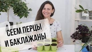 Когда и как сажать баклажаны на рассаду, видео : как правильно сажать семена баклажан в подмосковье, средней полосе россии, на урале, в сибири и юге