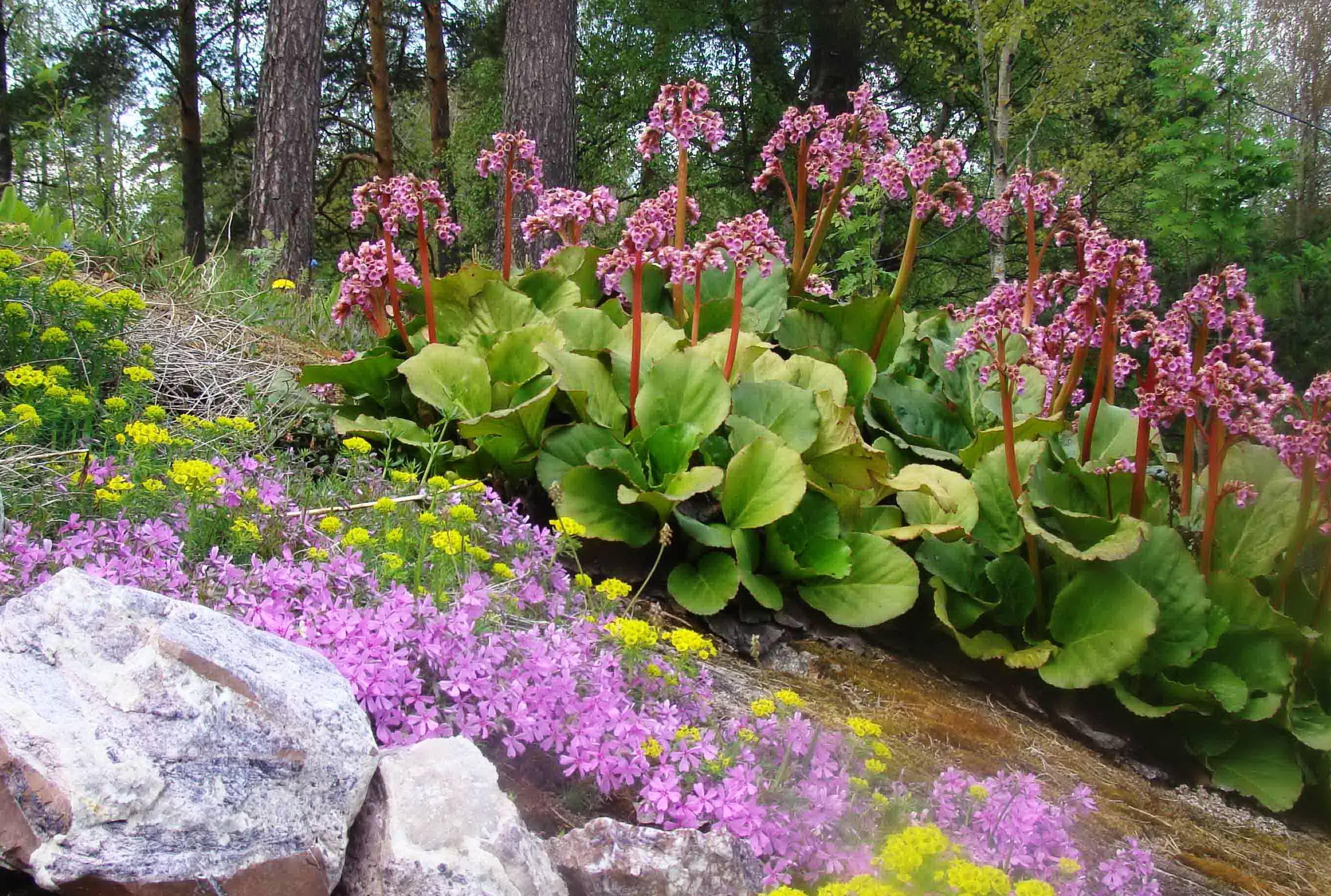 8 лучших цветов-многолетников для посадки в тенистом месте в саду