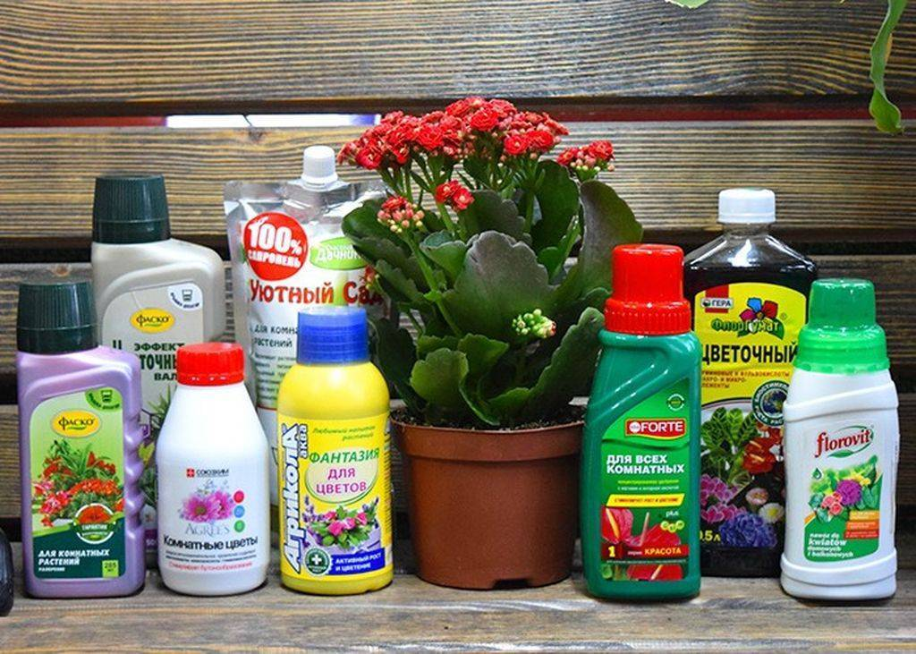 Чем подкормить орхидею – домашние и магазинные средства