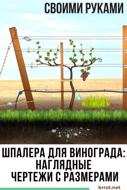 Шпалера для винограда своими руками - инструкция по изготовлению
