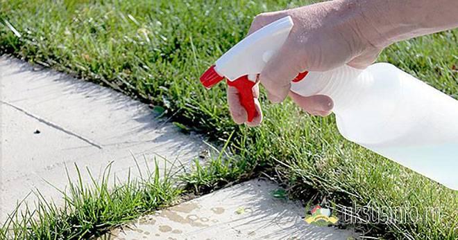 Уксус — средство от сорняков своими руками: простые способы борьбы