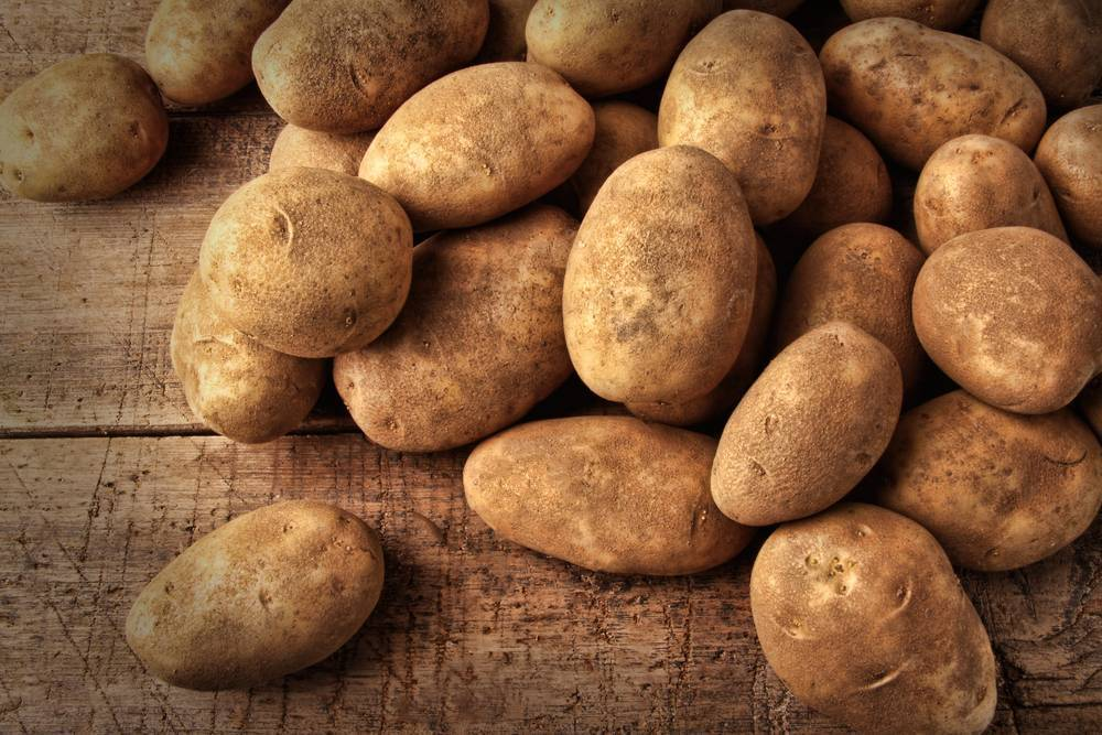 Картофель польза и вред для здоровья человека