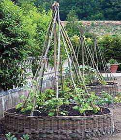 Секреты выращивания огурцов по методу портянкина и шамшиной - агрономы