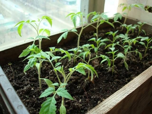 Лучшие препараты для работы с рассадой