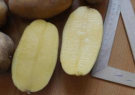Описание картофеля ассоль - мыдачники