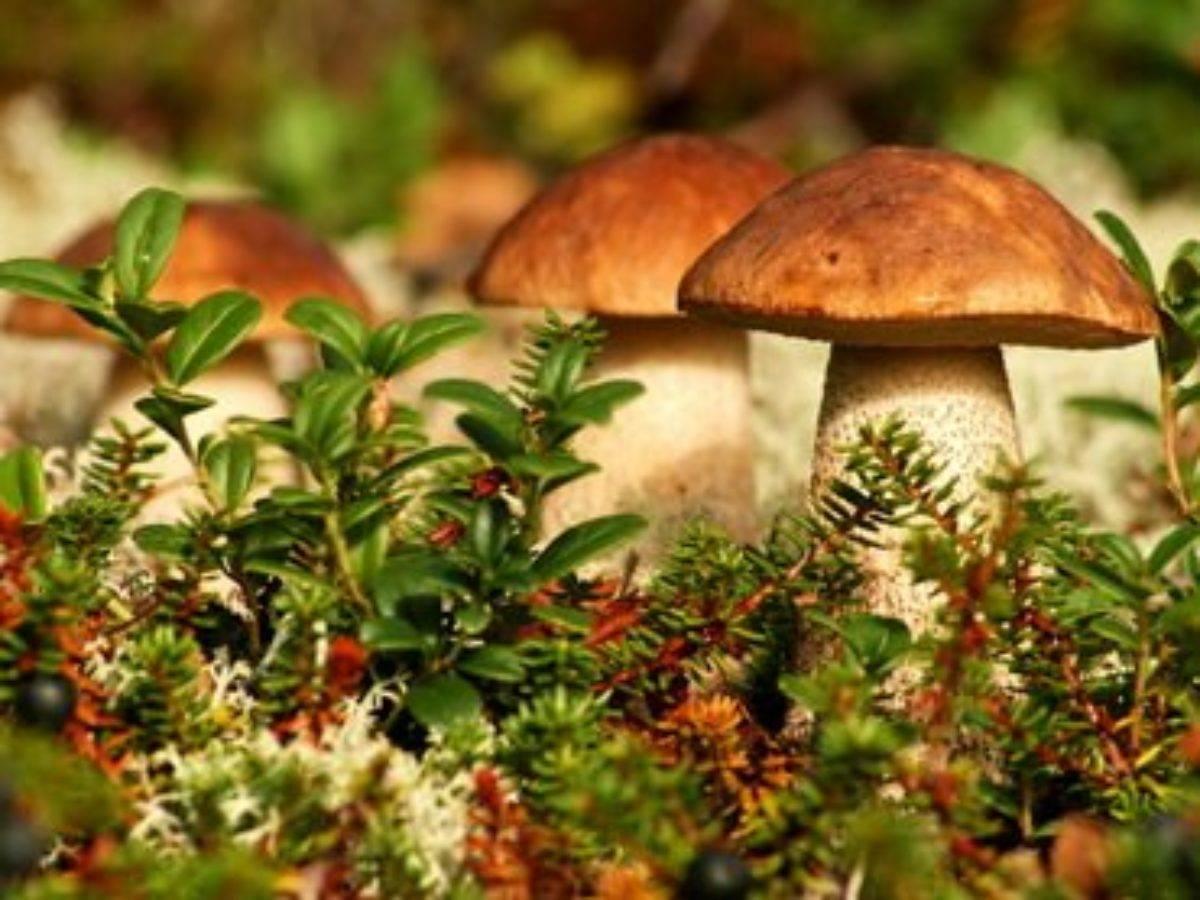 Одноклеточные и многоклеточные грибы – две половинки грибного царства