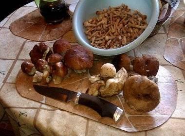 Как чистить грибы зеленушки и рыжики, как обработать после сбора от песка, как чистить белые грибы