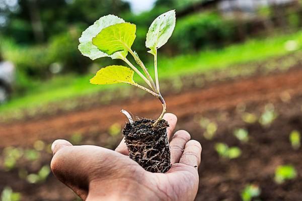 """""""корневин, сп"""" (5 г): инструкция по применению для растений - sadovnikam.ru"""