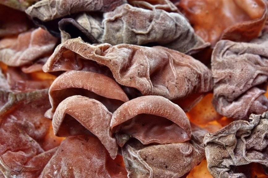 Древесный гриб муэр — деликатес азиатской кухни