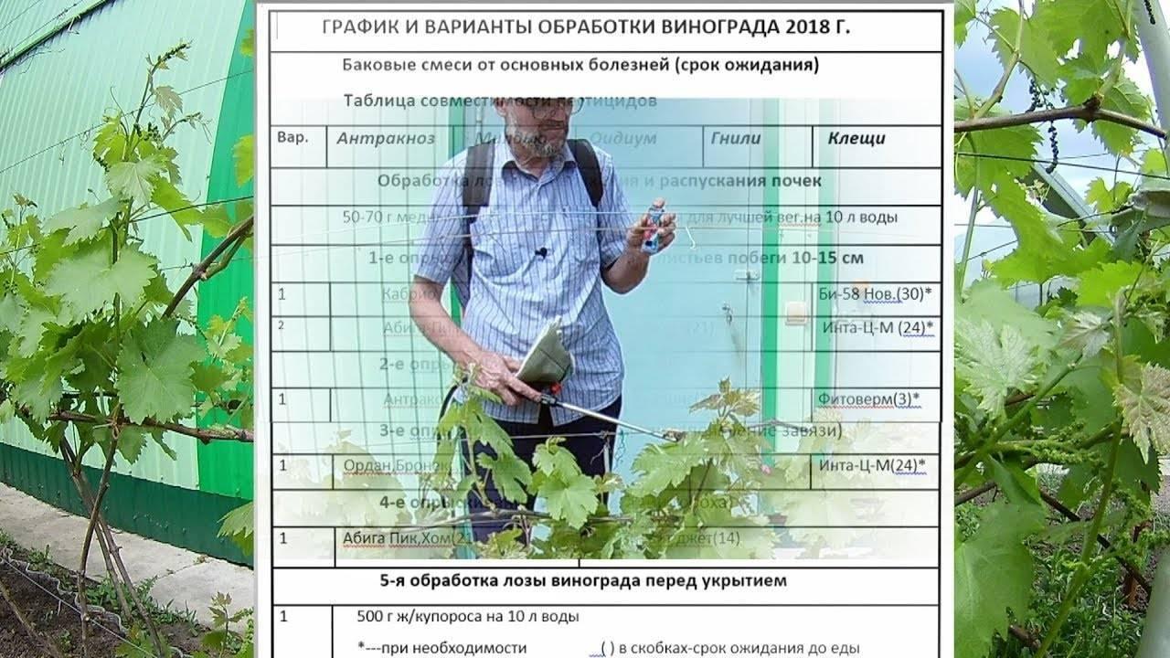 Незаменимый опрыскиватель. баковые смеси: группа практикум садовода и огородника