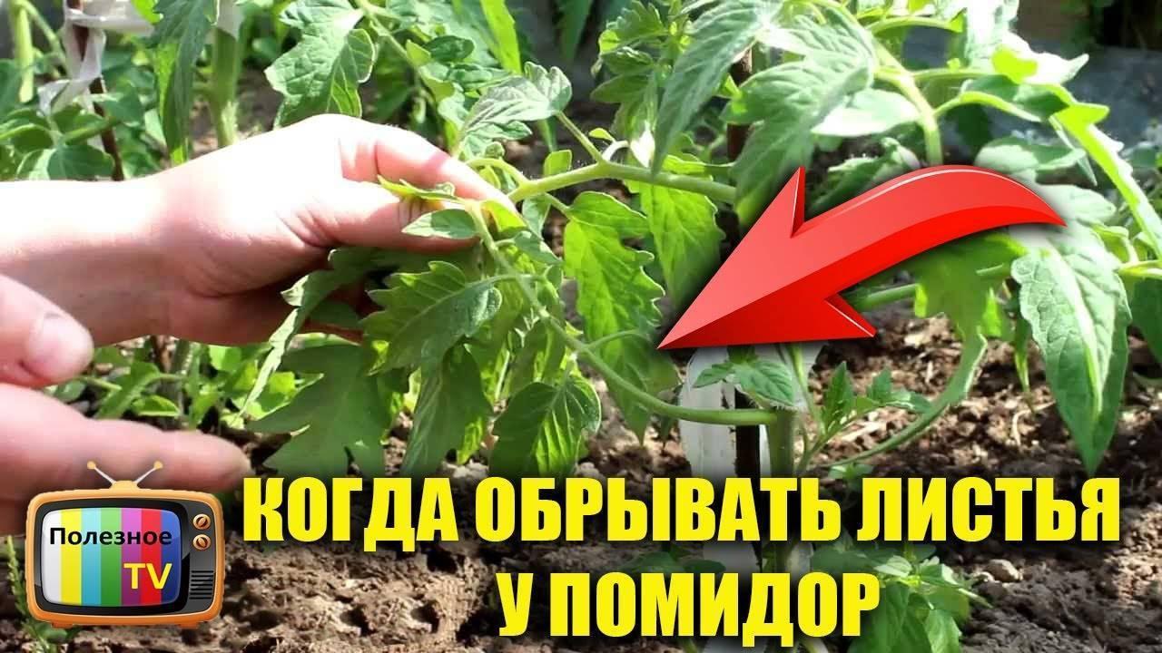 Как вырастить кабачки на балконе – 5 советов — agroxxi