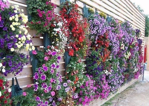 Что посадить возле дома, беседки, забора? какие кустарники, деревья, цветы можно посадить около дома? как посадить цветы вдоль забора: идеи, фото, инструкция
