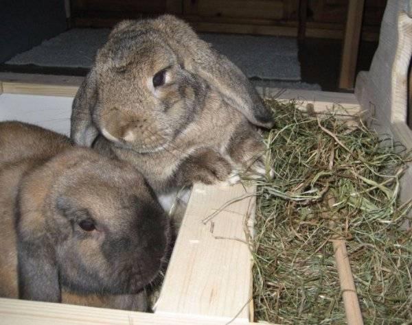Как сделать сенник для кроликов: инструкция по изготовлению своими руками