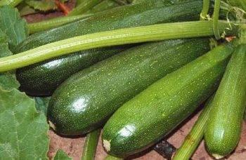 Кабачок скворушка: фото цуккини, отзывы, описание сорта