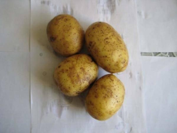 Купить картофель киевский свитанок
