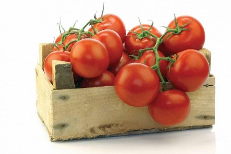 Томатный гибрид «красным красно»: описание и секреты высоких урожаев