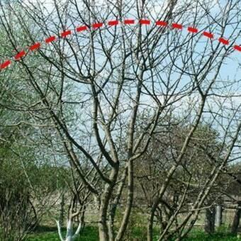 Правила посадки яблонь в сибири