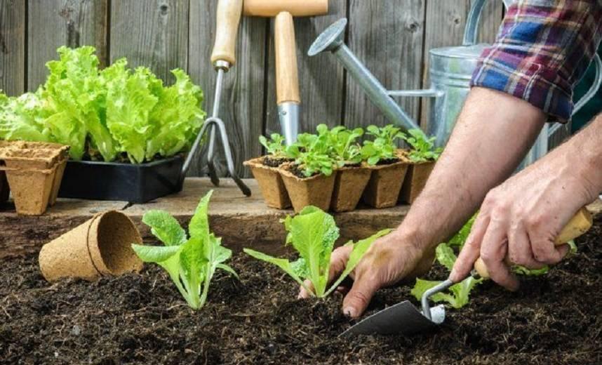 Сроки и особенности пикировки перца и баклажан: как подготовить растения и уход за ними после процедуры