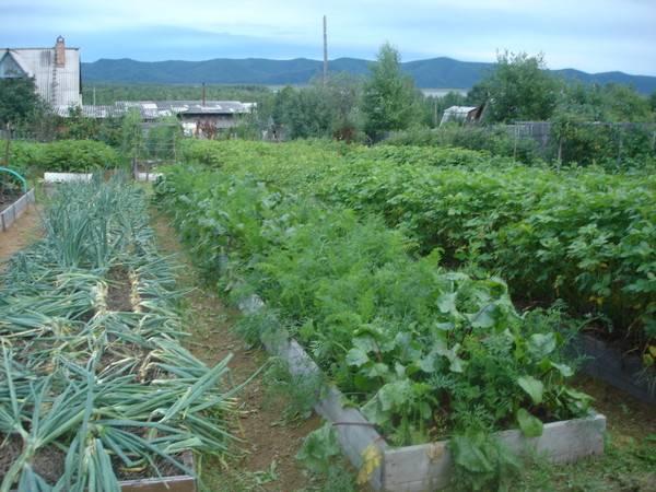 Хитрости в обустройстве узких грядок: огород лядова - огород, сад, балкон - медиаплатформа миртесен