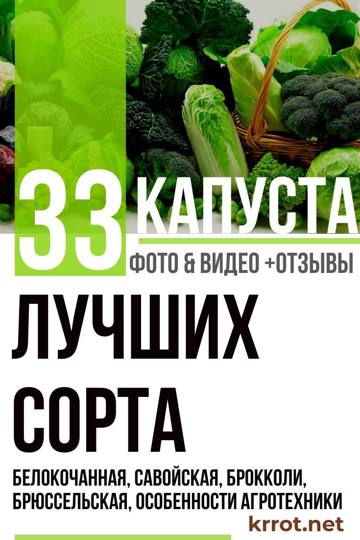 Ринда f1 — особенности урожайного гибрида капусты