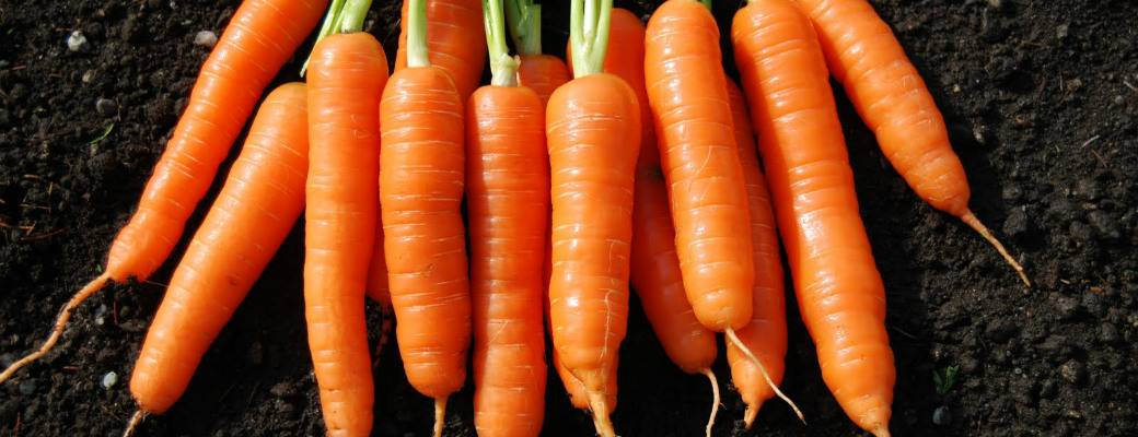 Сколько витаминов и пользы в моркови?