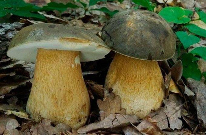 Выращивание грибов в домашних условиях — инструкция для новичков: описание на примере вешенок, шампиньонов, мицелия. тонкости данного бизнеса (фото & видео) +отзывы