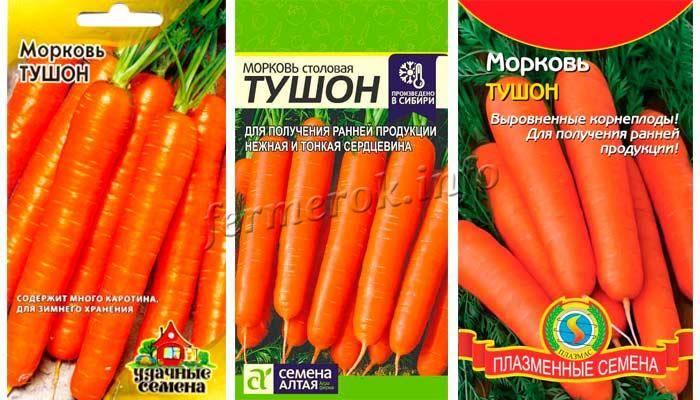 Авторский сорт моркови тушон - всё о землеводстве
