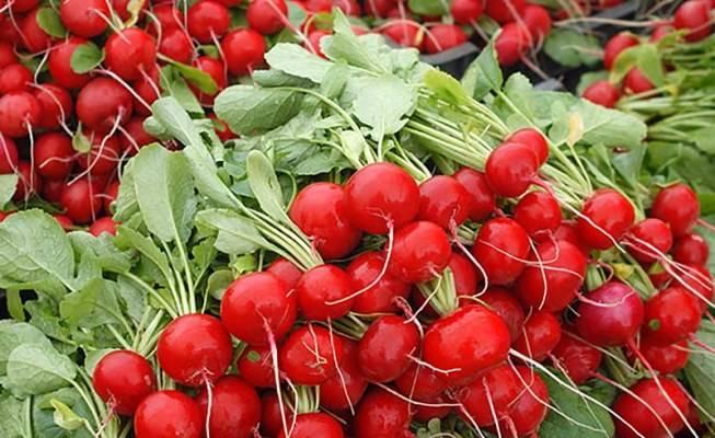 Редис селеста f1: описание сорта, отзывы, агротехника