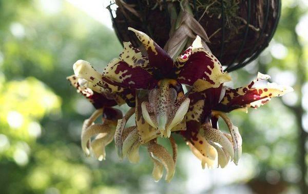 Представляем вам самые красивые сорта орхидей