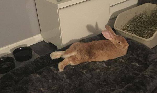 Туалет для кролика: какой наполнитель для кролика лучше