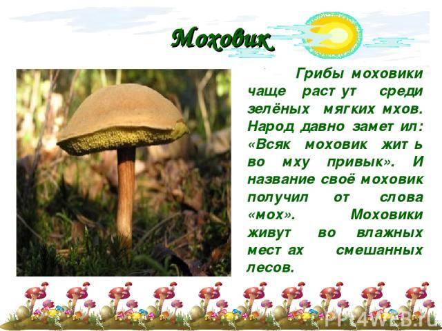 Где растут грибы в березняке, хвойных лесах, на лугах