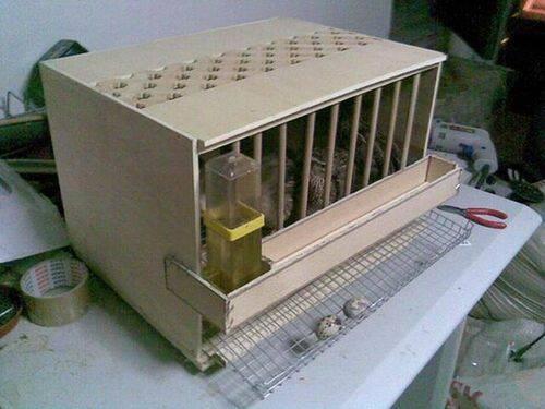 Как сделать инкубатор для перепелов?