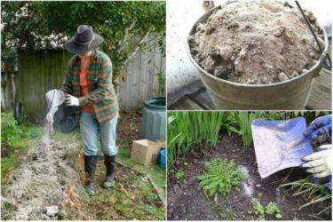 Зола как удобрение, как применять – как правильно использовать для растений?