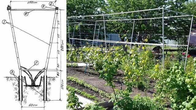 Как сделать шпалеру для винограда своими руками: виды шпалер, схемы конструкций, этапы сооружения
