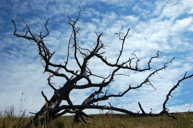 Как уничтожить дерево, не спиливая его