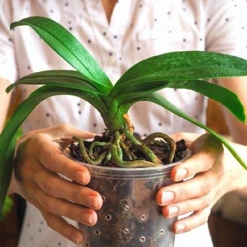 Примеры как можно использовать кору для орхидеи, приготовление в домашних условиях