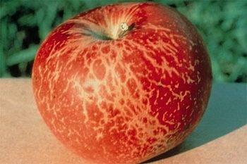 Апрельская обработка яблонь в 2019 году: самые опасные болезни и вредители, схемы защитных обработок | теплотехники