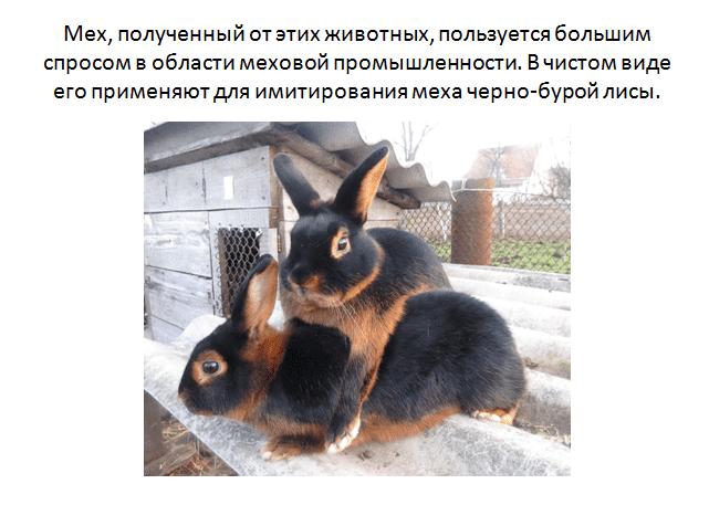 Беременность и роды кроликов: сроки, признаки, правила ухода