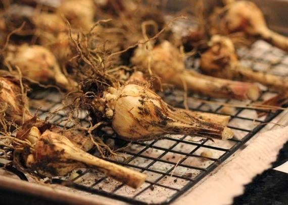 Гладиолусы: хранение луковиц на зиму