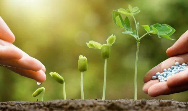 Инструкция по использованию стимуляторов роста растений | москва