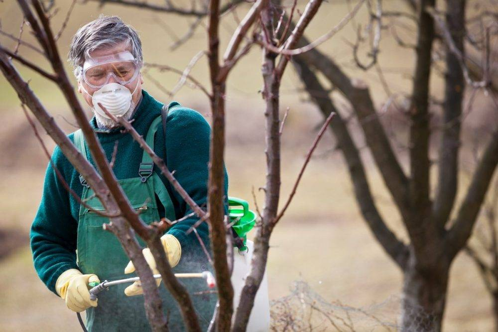 Лучшие средства для весенней обработки яблонь от вредителей и болезней
