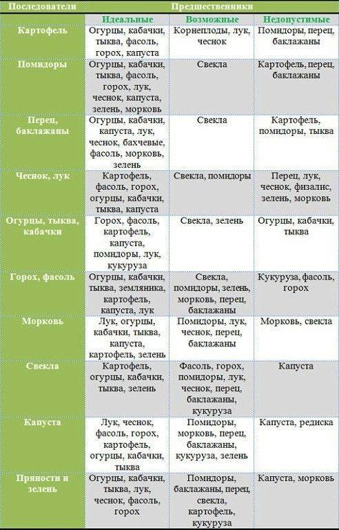 Предшественники лука и других овощей при посадке