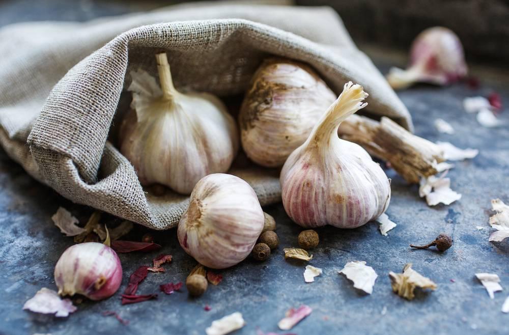 Выращивание чеснока: бизнес-план с расчетами